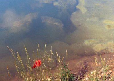 bord d'étang, avec le reflé du ciel et un coclico