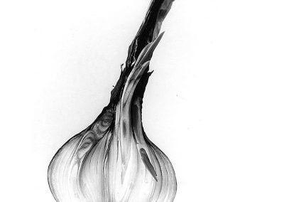 Photographie d'un oignon coupé